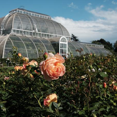 Exploring Nature Photography At The Kew Gardens