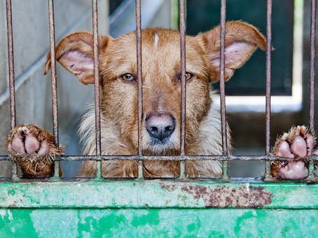 NO al maltrato animal. SÍ a una convivencia animal justa y respetuosa.