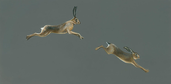 Leaping Hare