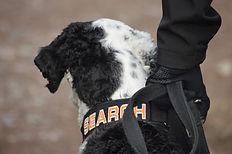 cadaver dog information