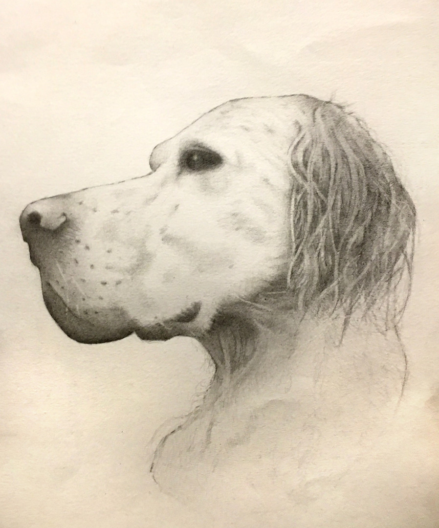 """Old Dog"" Pencil on Paper 21x29cm Completed Dec. 2018"