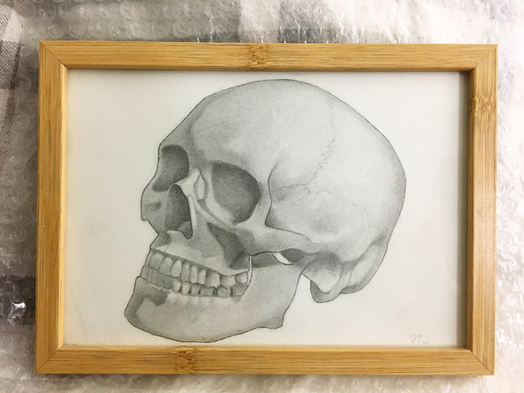 Study of skull