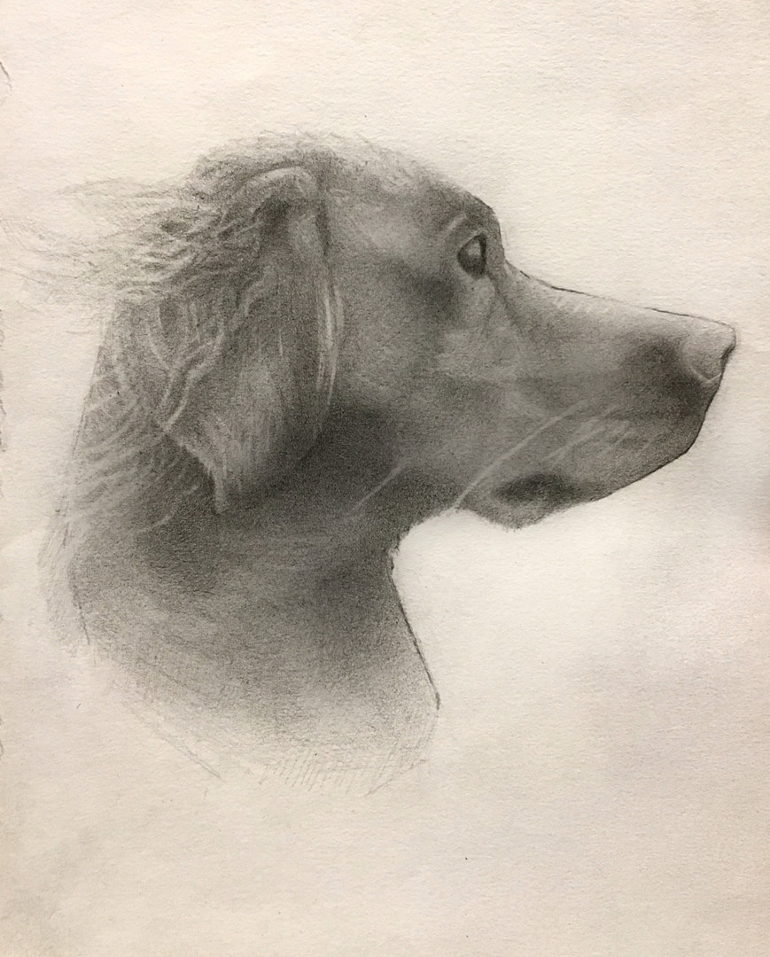 """Young Dog"" Pencil on Paper 21x29cm Completed Dec. 2018"