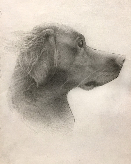 """""""Young Dog"""" Pencil on Paper 21x29cm Completed Dec. 2018"""