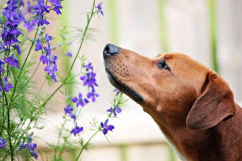 Naručite aromaterapeutski pripravak za svog psa