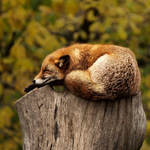 Sleep: Who needs it?