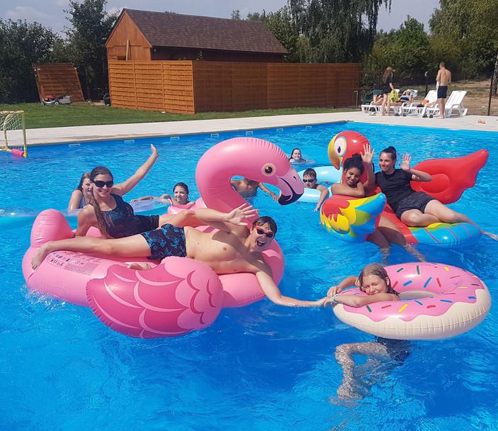 pool flamingo parrot.jpg
