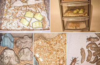 14L Mealworm Breeding Farm Set Up Starter Kit Darkling Beetles
