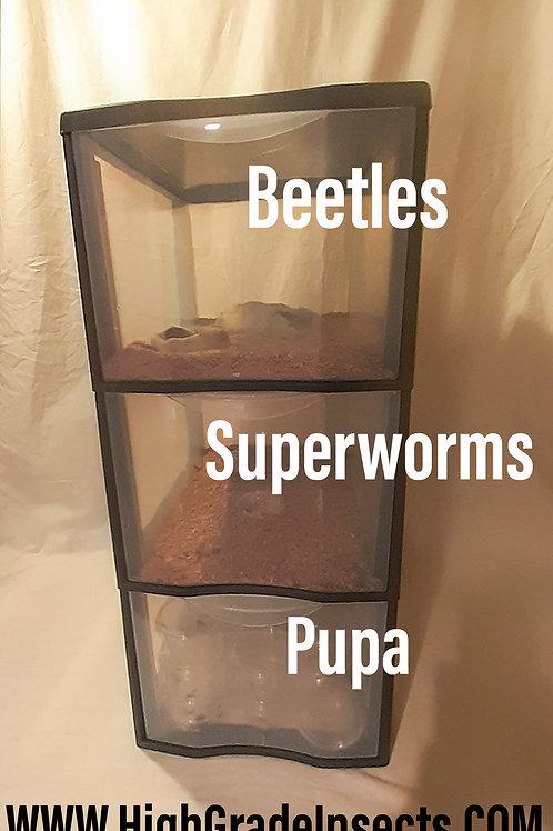 Morioworm Superworm Breeding Colony Kit For Chickens Garden Birds Reptiles