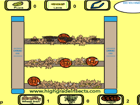 Mealworm Breeding Simulator Beta (learn how to breed mealworms with this interactive html5 game!)