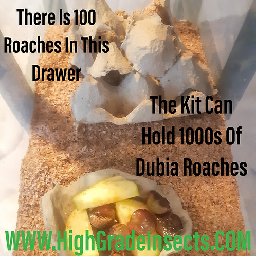 Dubia Roach Breeding Colony Starter Kit Set Up For Bearded Dragon Chickens