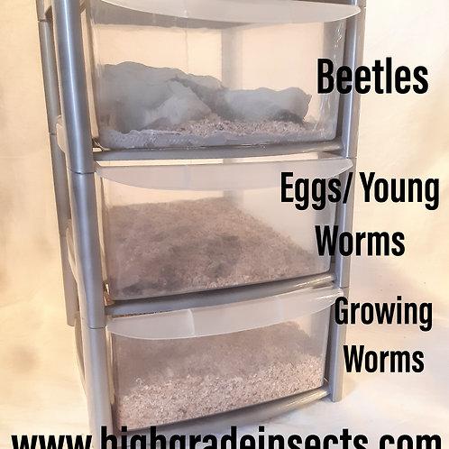 Smaller Morioworm Superworm Breeding Colony Kit For Chickens Garden Birds ect