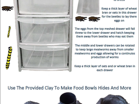 Meal Worm Breeding Booklet Updated, Free PDF Download