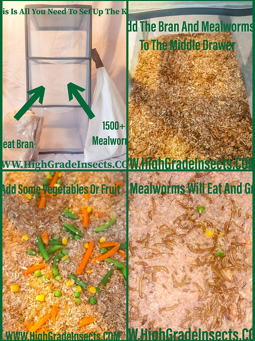 Large Mealworm breding Starter Kit Setup For Chickens Reptiles Fish And More
