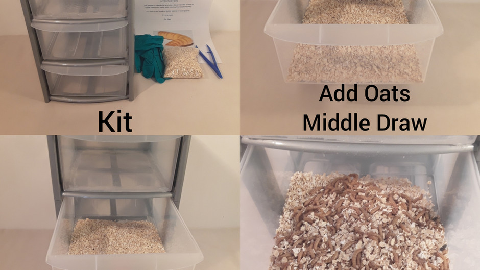 Copy of How To Breed Meal Worms Kit Blog Case Study (Part1)