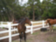 ranch fencing, horse fence, horse fencing, ranch fence