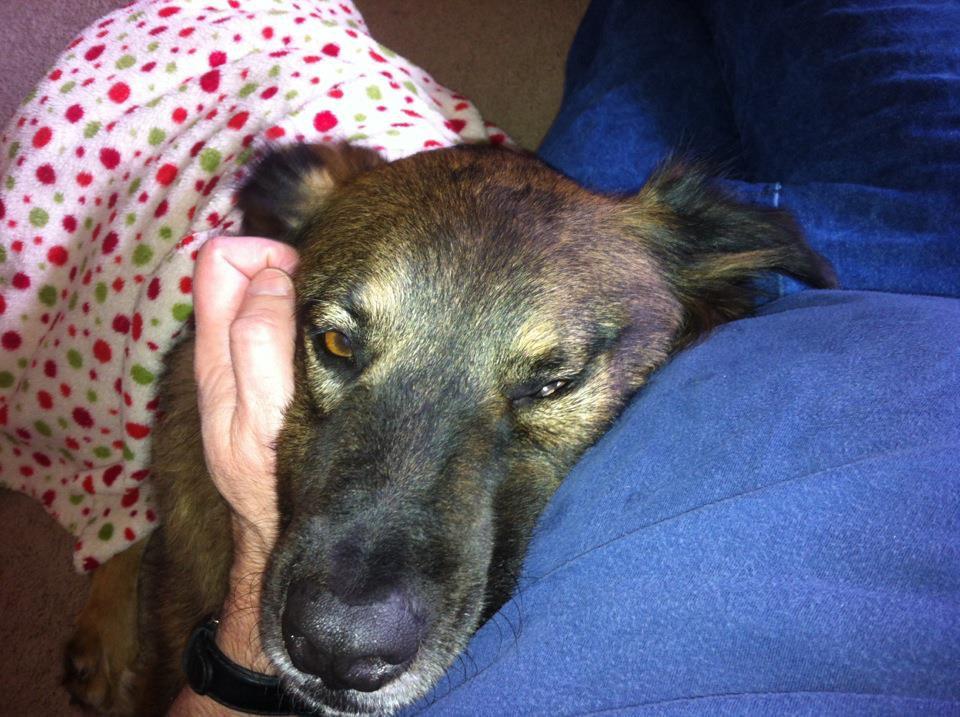 Emotional Service Animal Evaluation