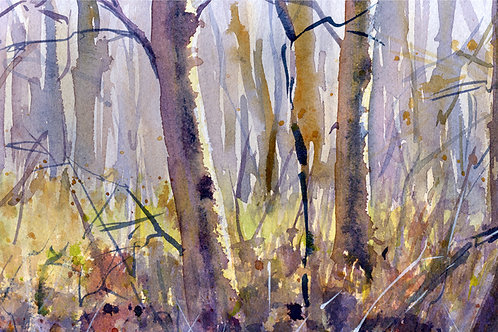 Signed, Limited Edition Print Winter Woodland