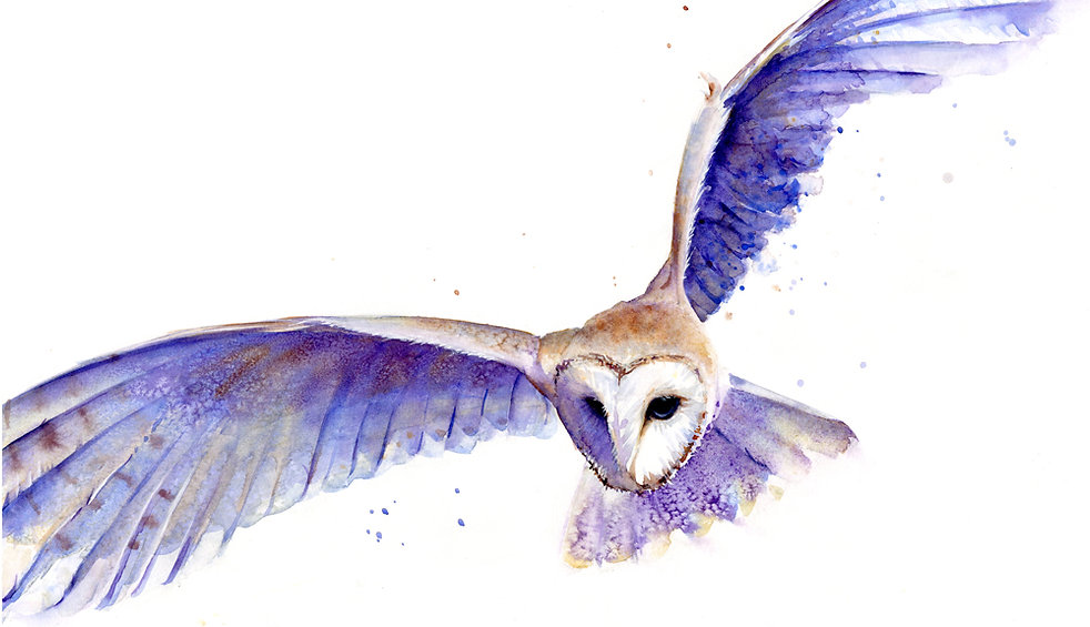 silent-swoop_barn-owl-ginn.jpg