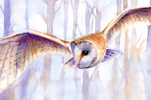 Signed, Limited Edition Print Barn Owl Blues