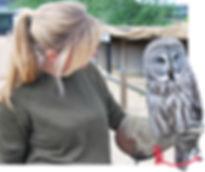 ali-owl.jpg