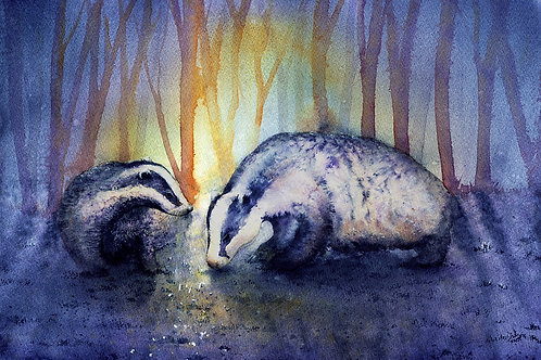 Signed, Limited Edition Print Badgers at dusk.