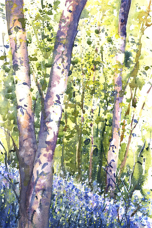 Signed, Limited Edition Print Sunlit Bluebells in Waresley and Gransden Wood