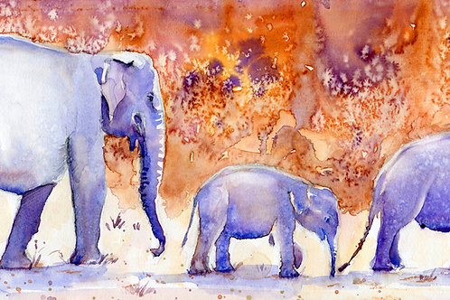 Signed, Limited Edition Print Elephants at Yala, Sri Lanka