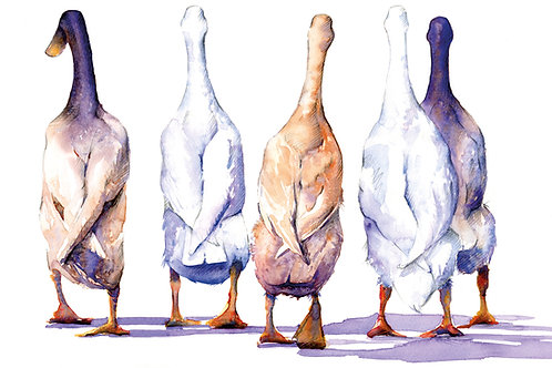 Signed, Limited Edition Print Birds of a feather (runner ducks)