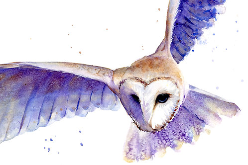 Signed, Limited Edition Print Silent Swoop (Barn Owl)