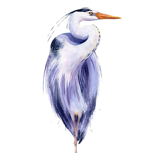 Signed, Limited Edition Print Highfalitin Heron