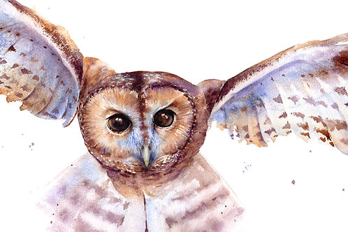 Signed, Limited Edition Print Tawny Owl in Flight