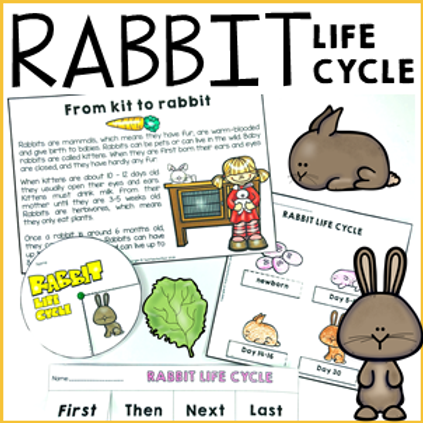 Rabbit Life Cycle Activities