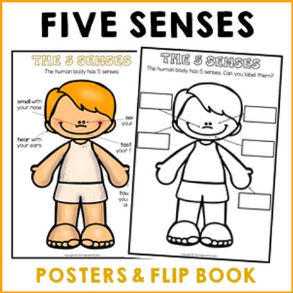 My Five Senses Flip Book & Posters