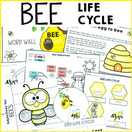 Bee Life Cycle Activities