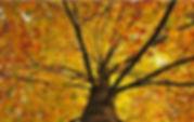 yellow_tree_hdr-t2_edited.jpg