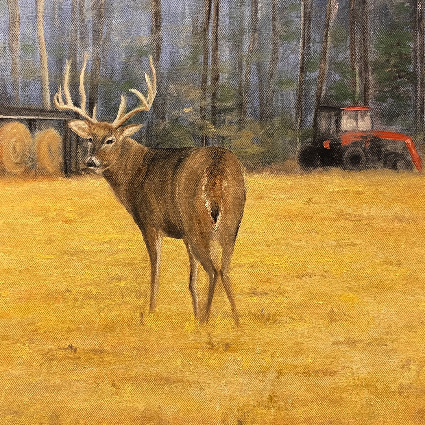 Buck on the Farm