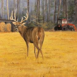 Buck on the Farm
