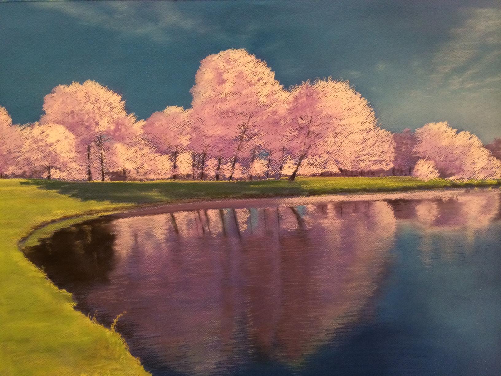 Cherry Blossom Daze