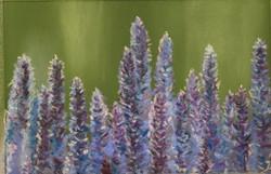 Purple Sage 1