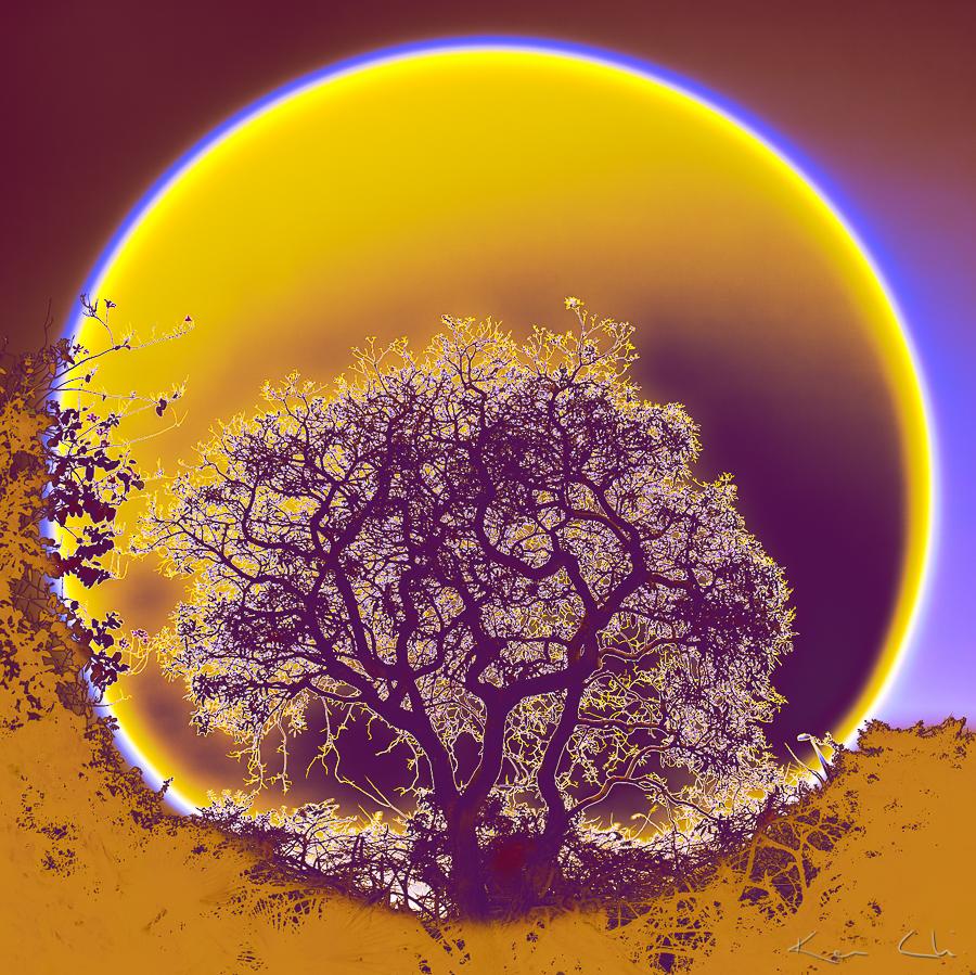 GROUNDING OF NATURE
