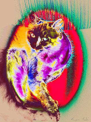 Cat Colors no.1