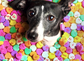 A Pet's Guide to Candy
