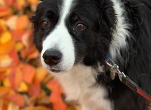 Keep Your Pets Safe This Autumn