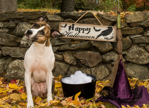 Tips for Keeping Your Pets Safe This Halloween!