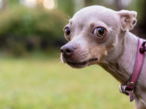 Four Simple Tips to Improve Your Dog's Confidence