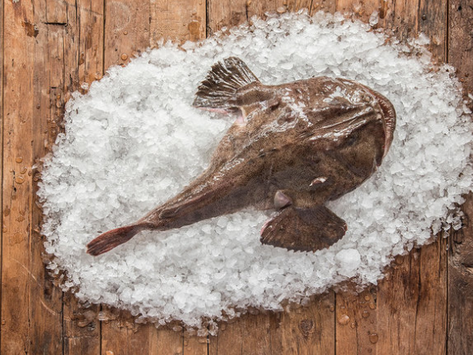 The Fisherman - Gulf of Maine Sashimi