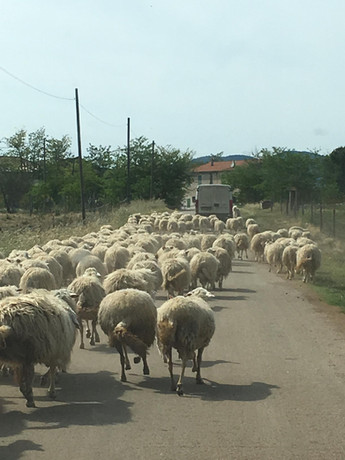 Rush hour - local style!