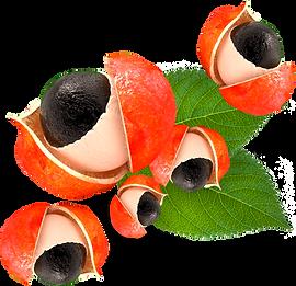 kisspng-guarana-dietary-supplement-extra