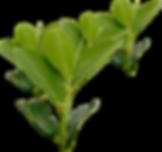 eliminacion-ilegal-tiempo-Evo-Morales_64